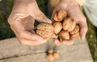 بایدها و نبایدهای غذایی سرطان پروستات 2