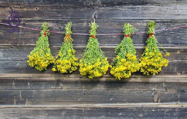 بهترین گیاهان دارویی برای رفع افسردگی و اضطراب