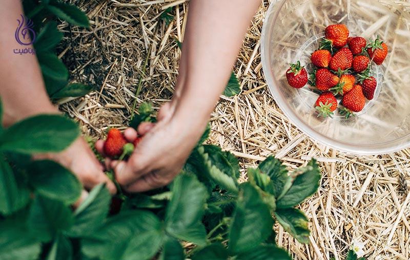 با بهترین میوه ها و سبزیجات بهاری آشنا شوید