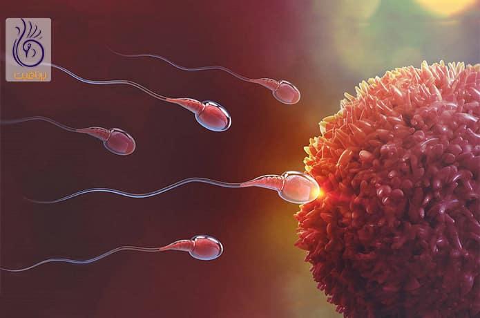 تخمک گذاری و بارداری
