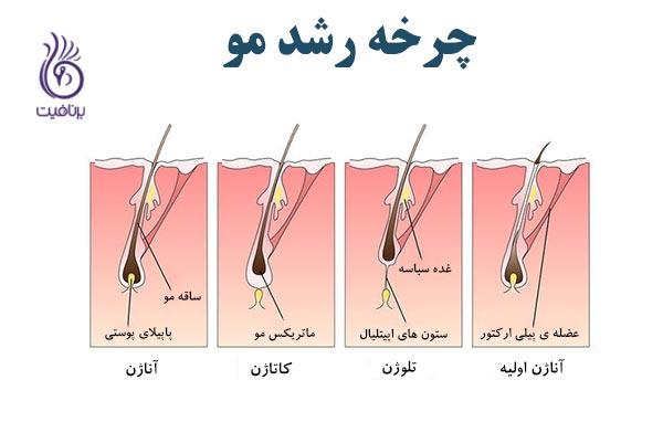 اگر دچار ریزش مو شده اید - چرخه رشد مو - برنافیت