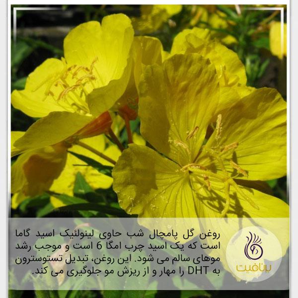 درمان ریزش مو - گل پامچال - برنافیت