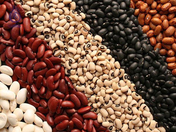 رژیم پروتئین - لوبیا